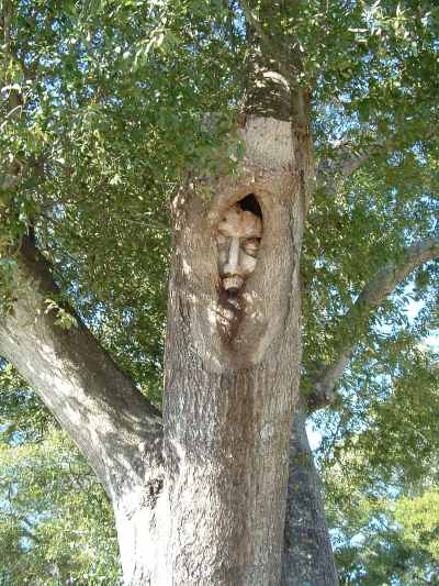 Tree spirits of st simons island generictrend